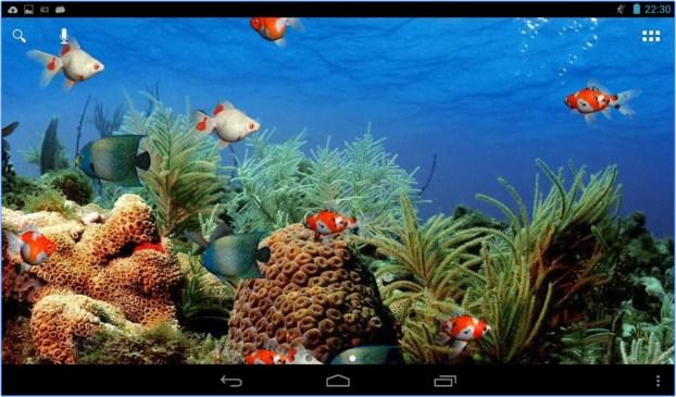 Download 55+ Wallpaper Ikan Bergerak Dalam Aquarium HD Terbaik